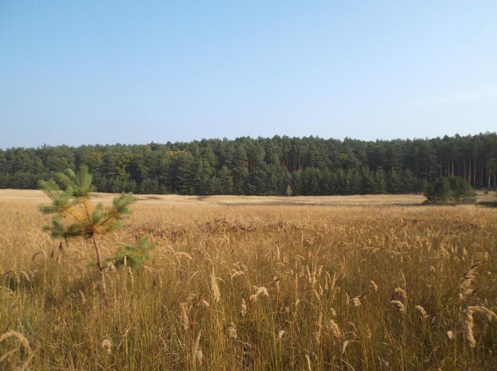 Osada Pąchy - działki na sprzedaż w zachodniej Wielkopolsce